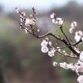 【月例会】平成26年4月例会開催予定